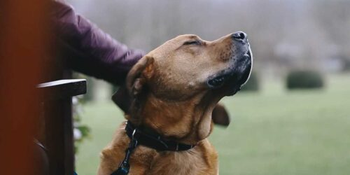 Featured image for Top Dogs Dream of a Devonshire Hotels' Canine Retreat