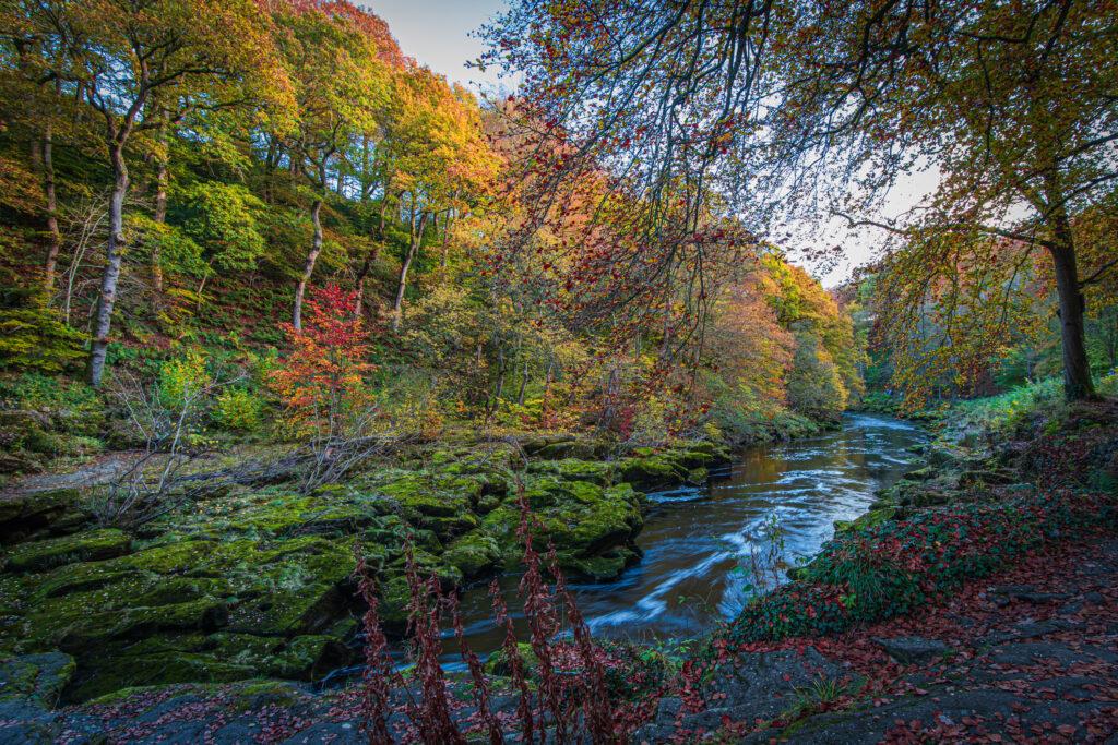 Strid Wood, Bolton Abbey, North Yorkshire, UK